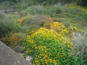 wild flowers acicastello 2
