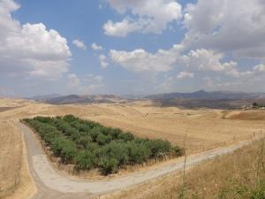 Not far from Agira