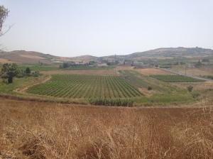 Vineyards on the way to San Vito