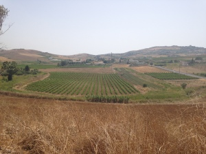 Vineyards on the way to San Vito