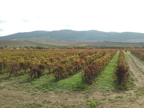 sambuca road vineyards